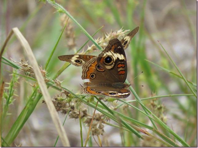 butterflyIMG_9776
