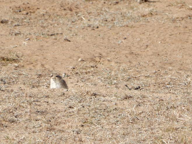 穴からひょっこり顔を出したネズミ