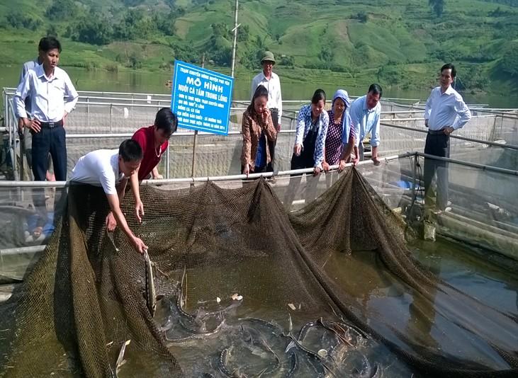 Kỹ thuật nuôi cá tầm trong lồng bè trên hồ chứa - 563d4dd289d5f