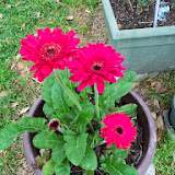 Gardening 2014 - 116_1255.JPG