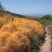 laguna-coast-wilderness-el-moro-020.jpg