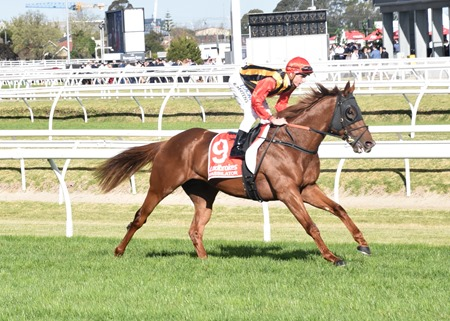 caulfield guineas_vassilator 4