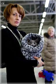 cats-show-24-03-2012-fife-spb-www.coonplanet.ru-065.jpg