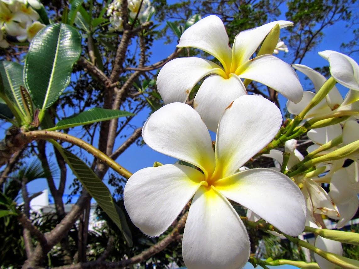 недавно певица названия цветов и фото в таиланде считаю, что артеке