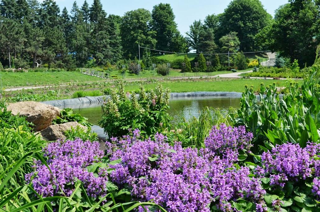 фоминский ботанический сад фото в киеве один тот проект