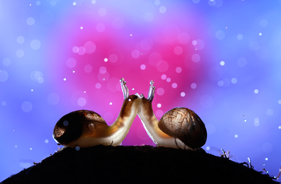 Make Slime Not War! by Nadav Bagim - Public Holidays Valentines Day ( love, snails, kiss, macro, heart, valentines, wonderland, couple, pink, cute, bokeh, emotion )