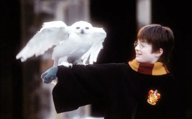 """""""Harry Potter e a Pedra Filosofal"""": como tudo começou"""