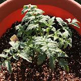 Gardening 2012 - IMG_3199.JPG