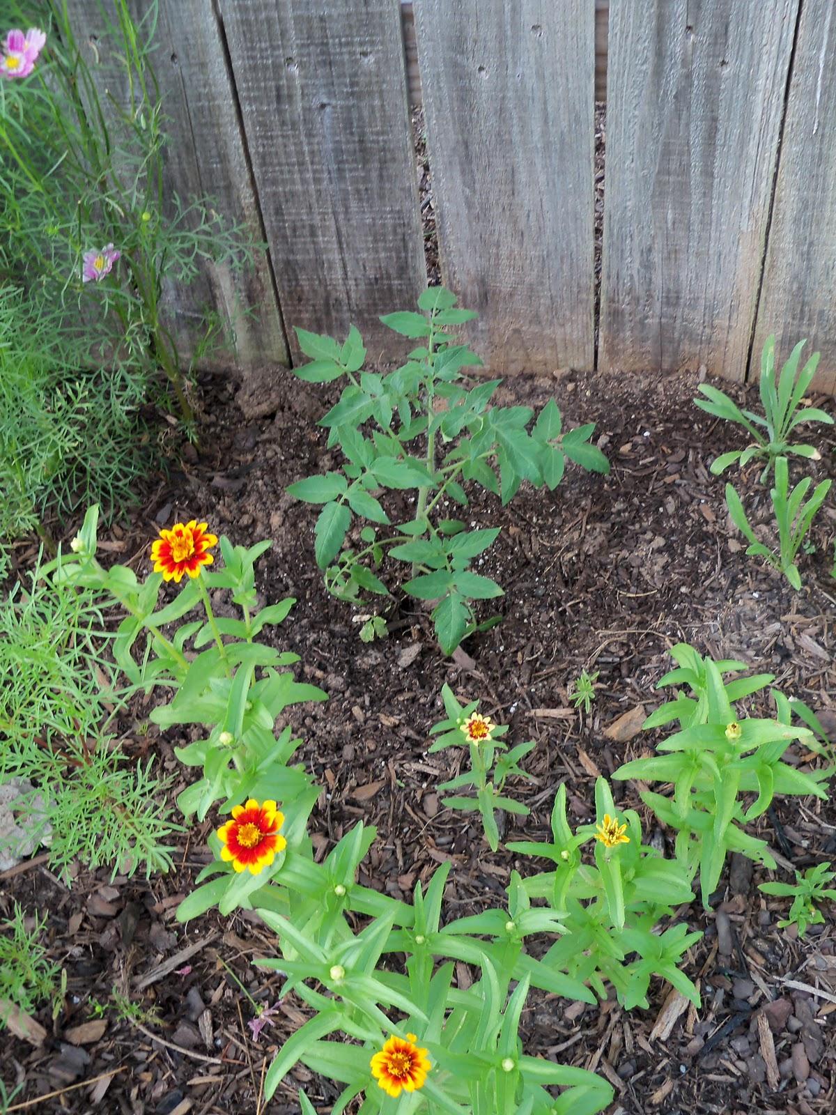 Gardening 2010, Part Two - 101_2896.JPG
