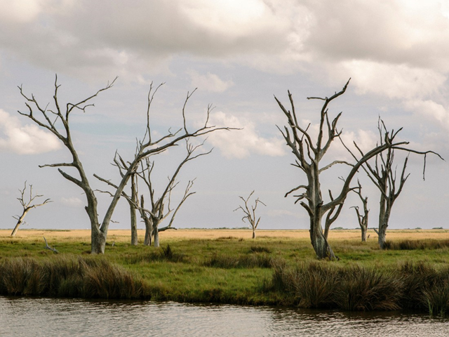 The landscape of coastal Louisiana is marked with 'ghost trees' that have fallen victim to saltwater intrusion. Photo: William Widmer / Redux