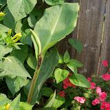 Gardening 2011 - 100_8600.JPG