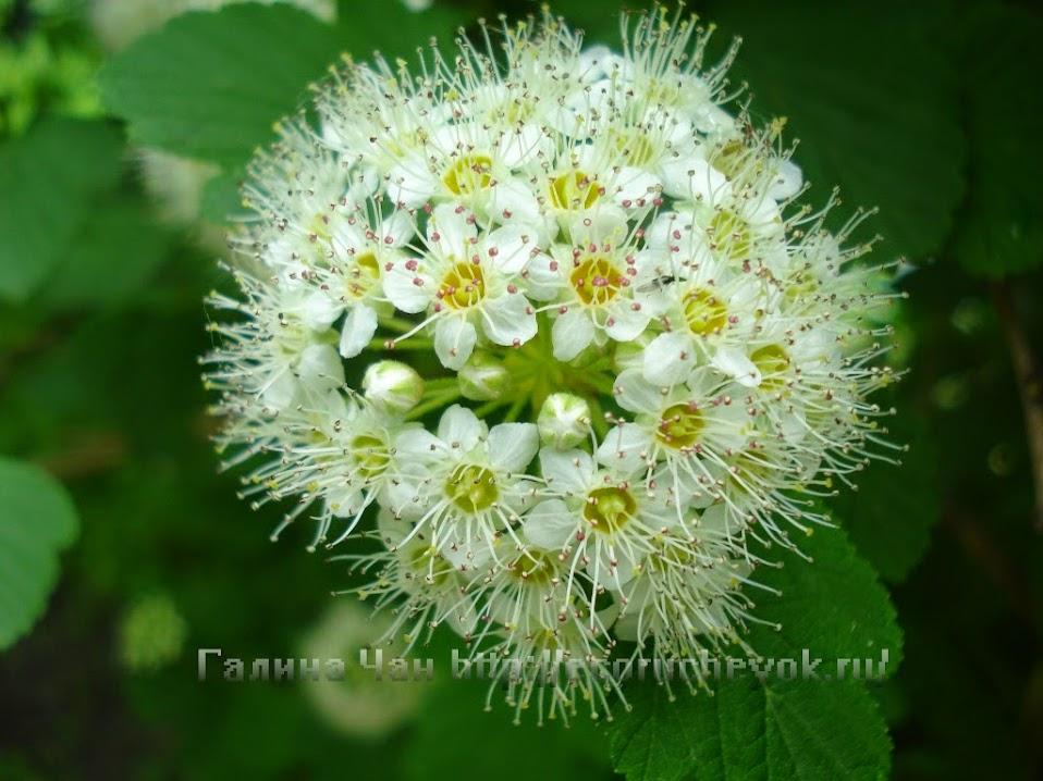Цветы для настроения