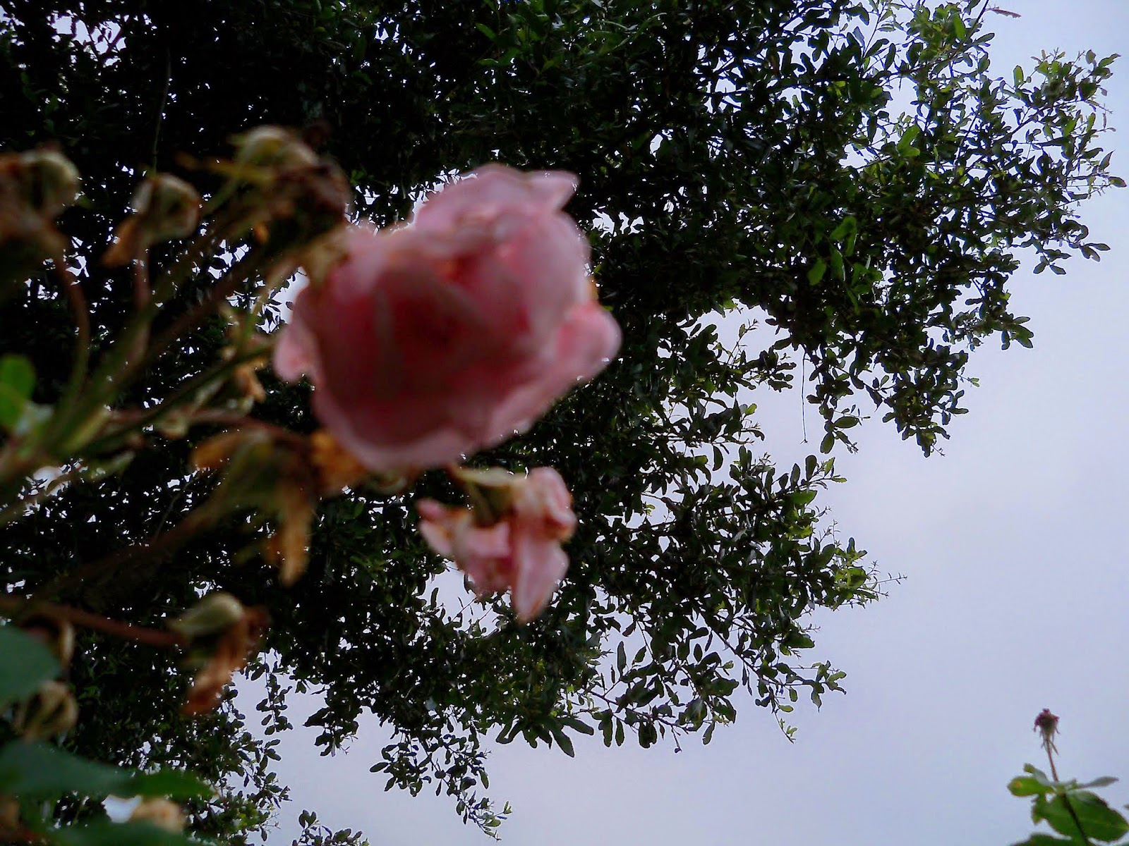 Gardening 2014 - 116_1832.JPG