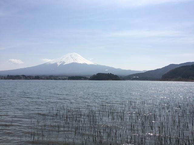 春の河口湖