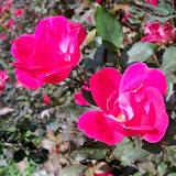 Gardening 2013 - 116_0015.JPG