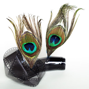 Old School by Anika McFarland - Artistic Objects Other Objects ( peacock feathers, film, fimroll, peacock feather, feathers, feather,  )