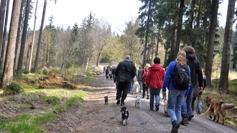 2014-04-13 - Waldführung am kleinen Waldstein (von Uwe Look) - DSC_0404.JPG