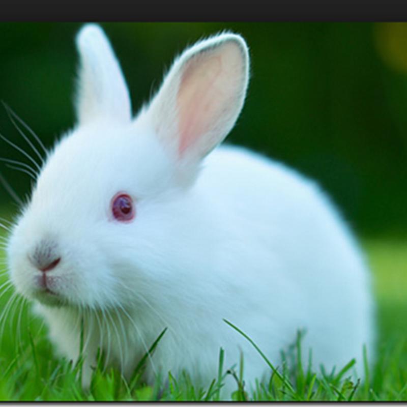 Humor El conejo de la tienda de mascotas