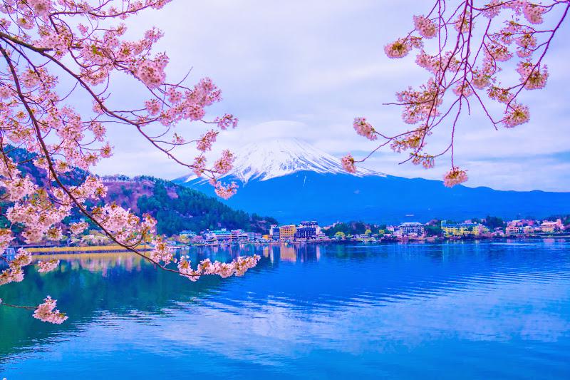 河口湖 桜 写真1