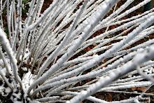 Parc de Belleville : branches gelées