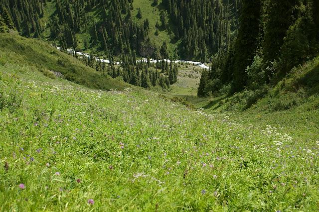 Biotope de Parnassius tianshanicus et de nombreux autres rhopalocères. Kyzyl Aksuu, Kungej Alatau, Kyrgyzistan (5 juillet 2006). Photo : J.-M. Gayman
