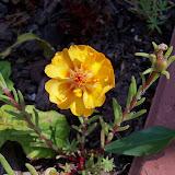 Gardening 2010, Part Two - 101_1852.JPG
