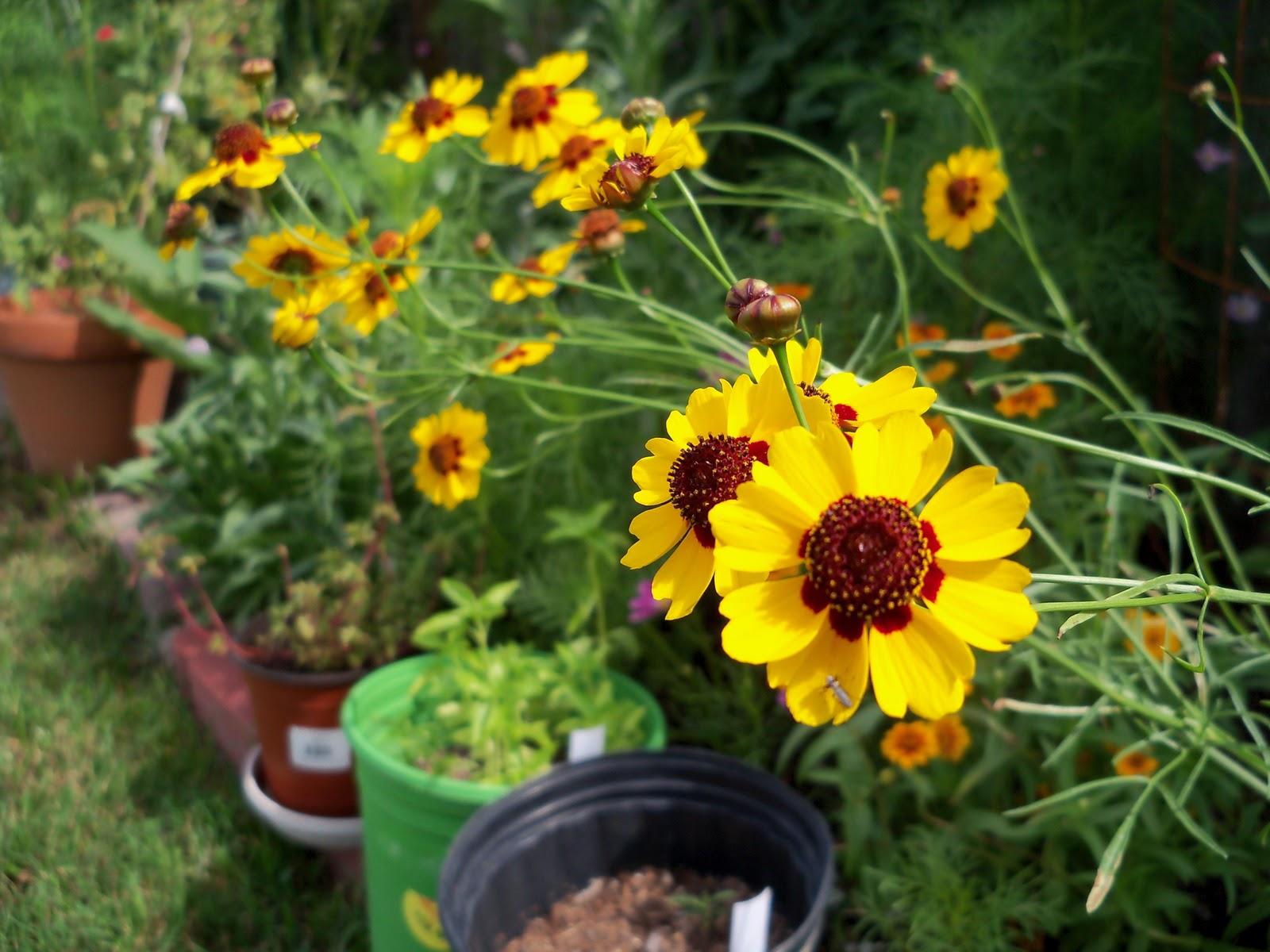 Gardening 2010, Part Three - 101_3757.JPG