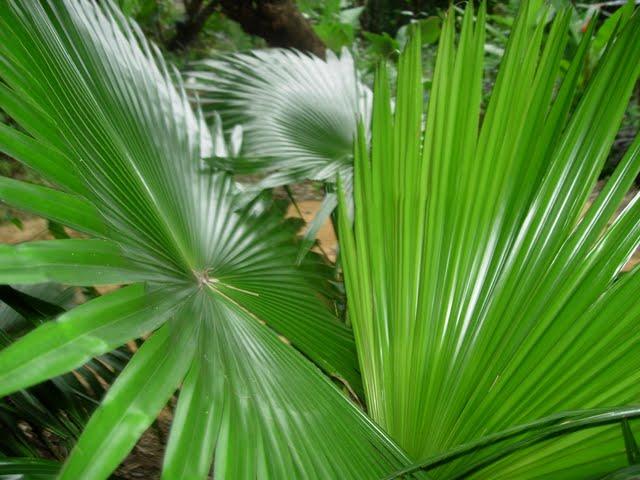 Grow Fresh Air Plants - DSCN3155.JPG