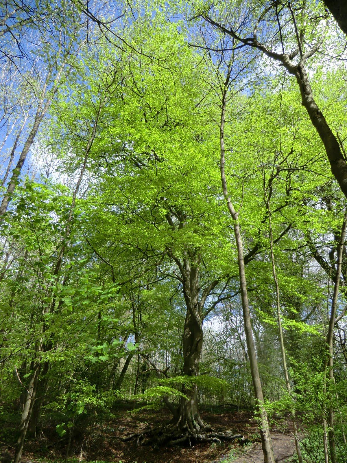 CIMG8014 Marden Park Woods