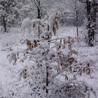 Зимняя уборка в Дендрарии 025.jpg