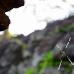 Teraz świątynie zamieszkują pająki...