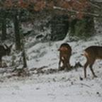 tn_lachaux-2010-12-01.jpg