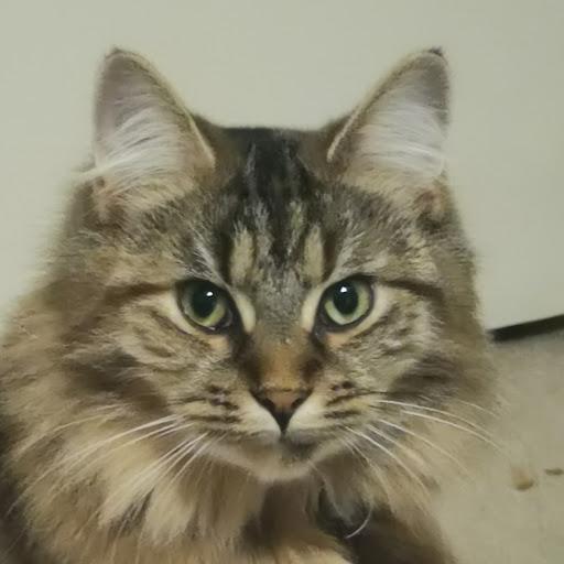 Dax Motzu