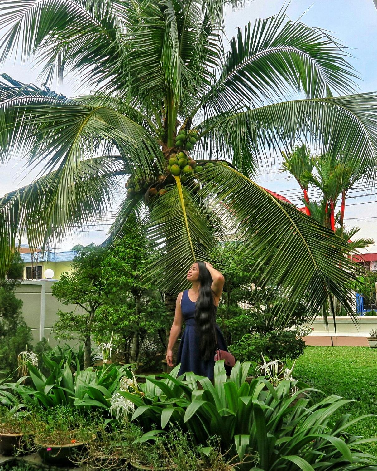 coach dinky malaysia palm tree