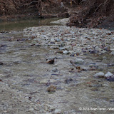 01-05-13 Arbor Hills Nature Preserve - IMGP3983.JPG