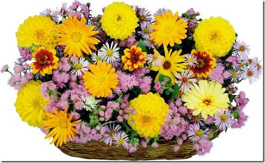 margaritas flores (2)