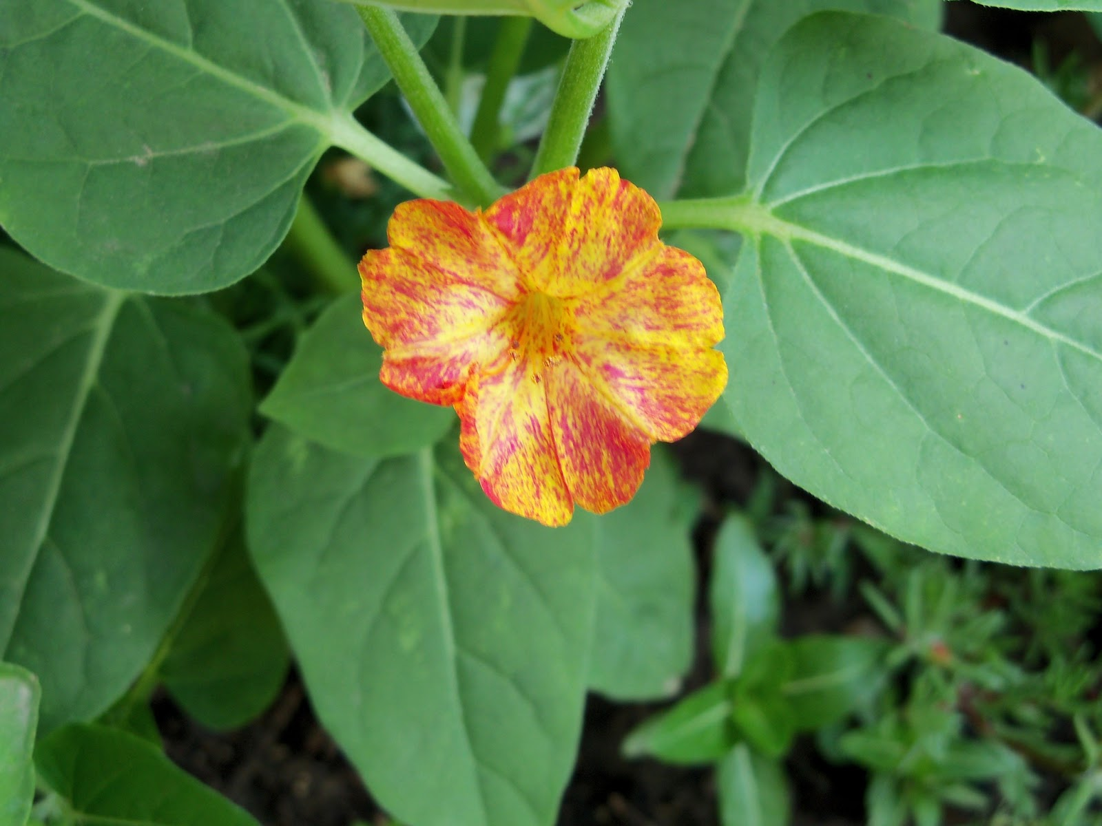 Gardening 2011 - 100_7783.JPG