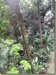 20151228_rainforest (Small)