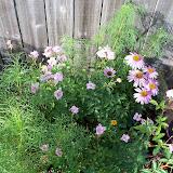 Gardening 2010, Part Three - 101_3937.JPG