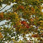 2013.09.29 1. Iisaku rahvajooks - AS20130929IISAKU_011S.jpg