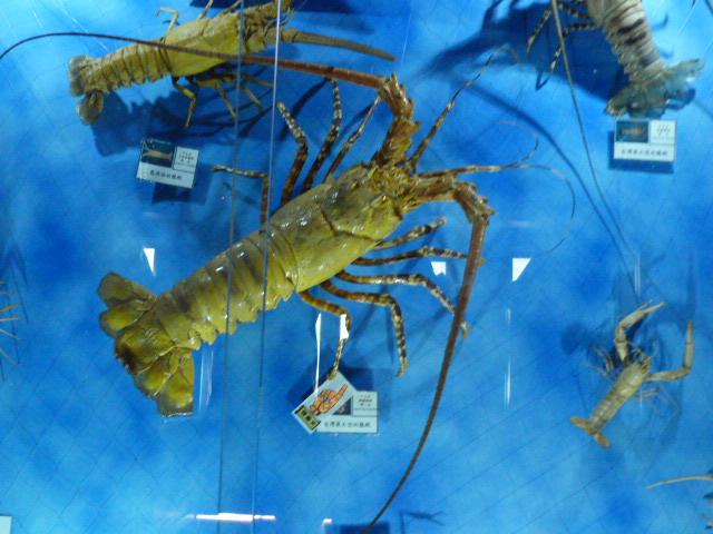 TAIWAN.Toucheng .musée du crabe situé au Pei Kan Resort, surfers,maison Japonaise du chef de gare - P1080723.JPG