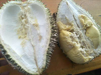 Musim durian puas makan tahun ni