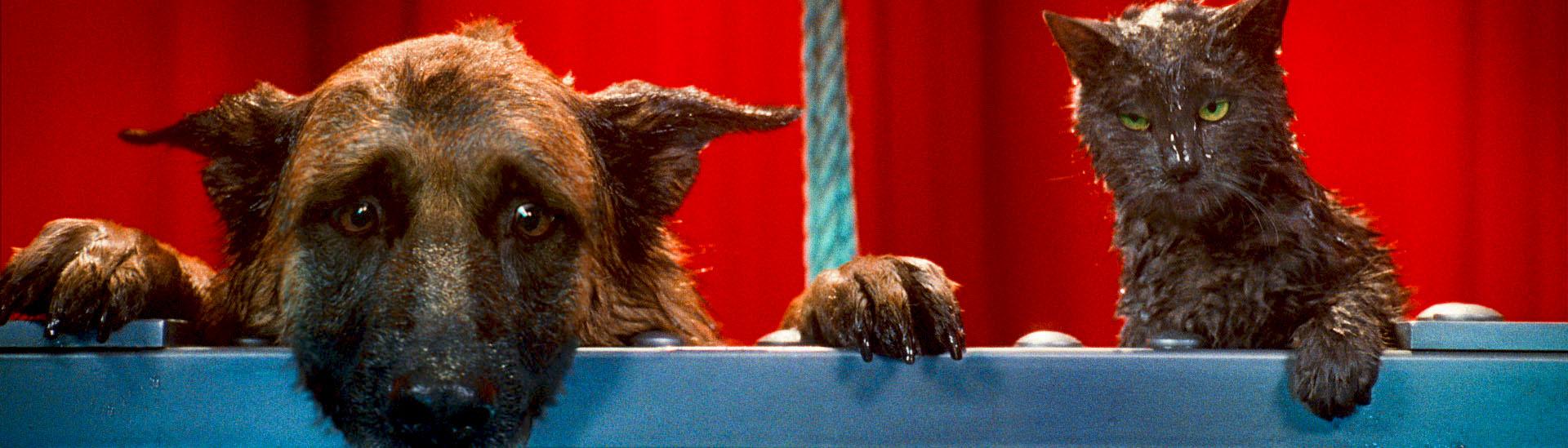 Baner filmu 'Psy i Koty: Odwet Kitty'