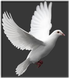 palomas (6)