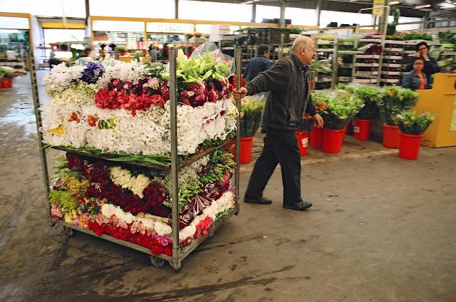 Mercat de Flor i Planta Ornamental de Catalunya - 85350003.jpg