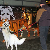 KNON puppys in de stad nov 2008 - hond%25252520tijger.jpg