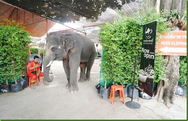 Thai27