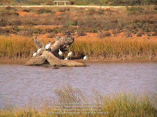 02 Rocky Gully Wetlands-Loop & Main trail (9 )
