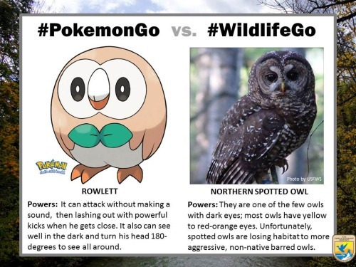pokemongo-vs-wildlifego-7