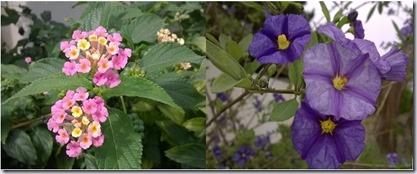 flores juntas